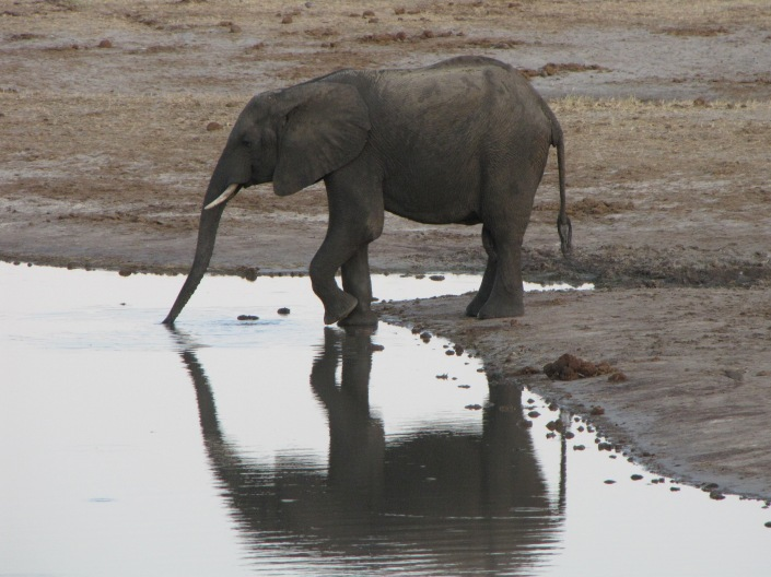 """Elephant at a water hole"""