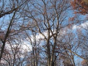 A clear blue sky framed by autumn trees.