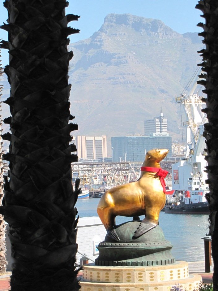 Golden seal with the bay and Table Mountain in the background.