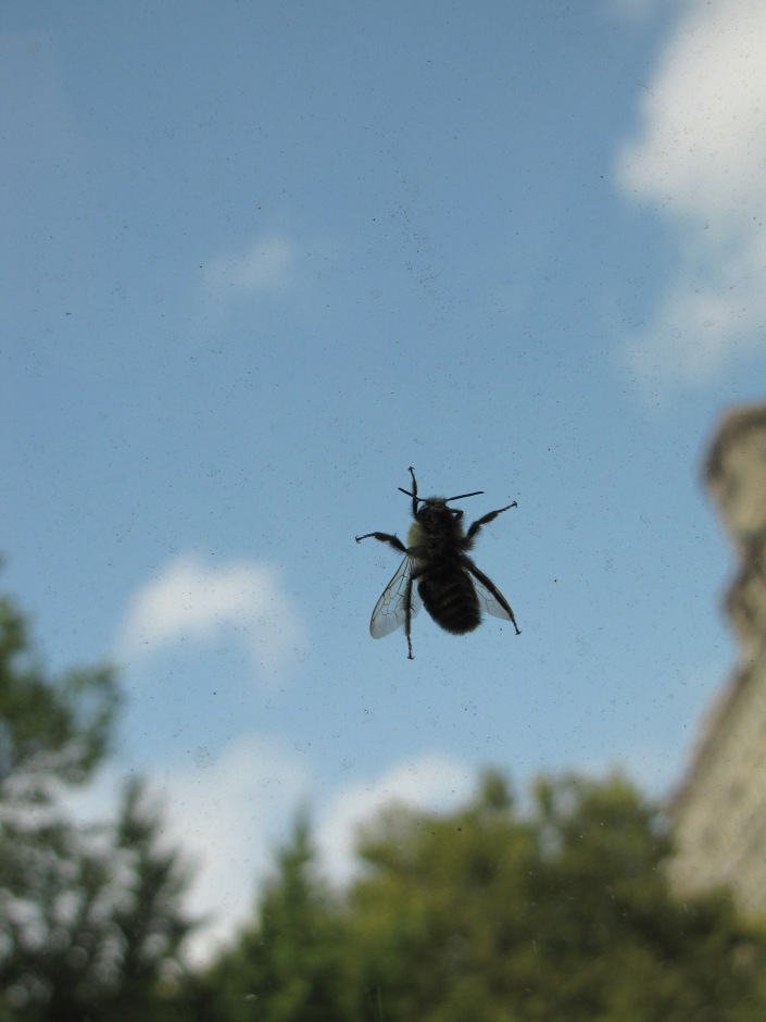 Shot this fly on the window of my cab in Central Park, NYC.