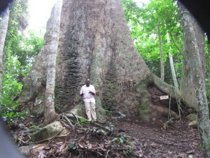 Our guide, who called himself 'the last crocodile,' in front of a tree that's more than 1,000 years old, in the equatorial forest near Ebogo.
